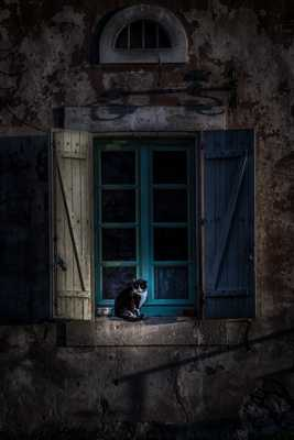 The Cat & The Blue Windows