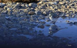 Un petit oiseau, un petit peu d'eau s'aimaient d'amour tendre !!!