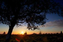 L'imagination a le droit de se griser à l'ombre de l'arbre dont elle fait une forêt. (Karl Kraus)