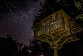 perché dans un arbre, la tête dans les étoiles