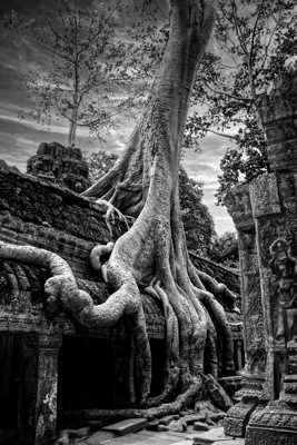 Les racines et la pierre