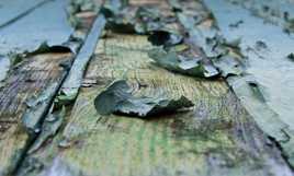 Ecaille peinture Verte