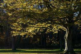 Un arbre, une arbre...