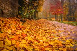 Les feuilles de l'automne