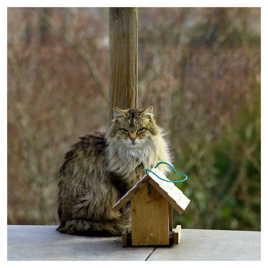 Aucun chat à fourrure si brillante qui n'ait des griffes acérées