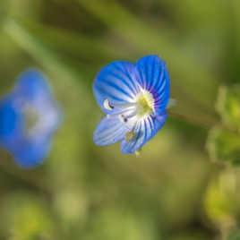 petite fleur et son insecte