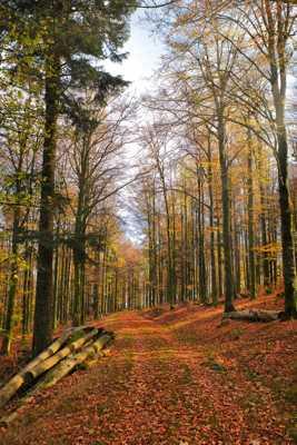 Au bout de l'automne