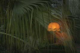 lampe dans les palmiers