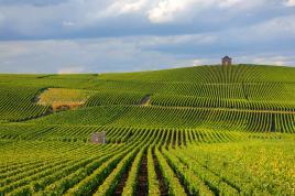 paysages de champagne