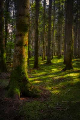 La forêt enchantée.
