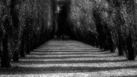 Une allée d'ombres