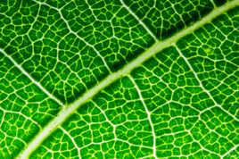 Le Réseau Vert