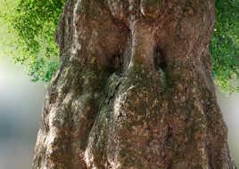 le regard de l'arbre