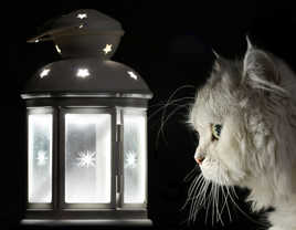 entrer dans la lumière !