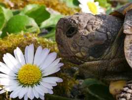 Fleur ou tortue que la nature est belle !