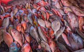 Marché aux poissons, Pointe à Pitre