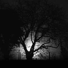 La Racine obscure