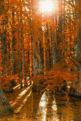 Lumière d automne