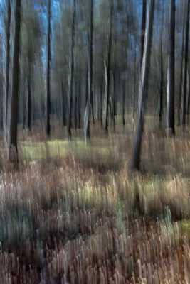 Le bois d'Oihana