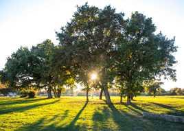Nature lumineuse