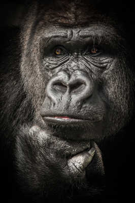 Human Gorillaz