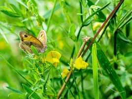 Nectar de fleurs jaunes