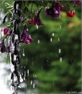 Pluie en chaine