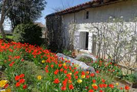 Le jardin aux tulipes