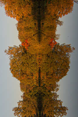 Reflexion verticale-Un nounours vous regarde