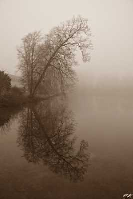 Reflets et brouillard
