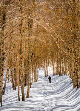 Sous bois hivernal