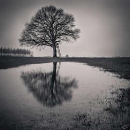 Reflet d'arbre d'hiver