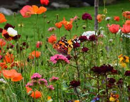 Papillon dans un champs de fleurs