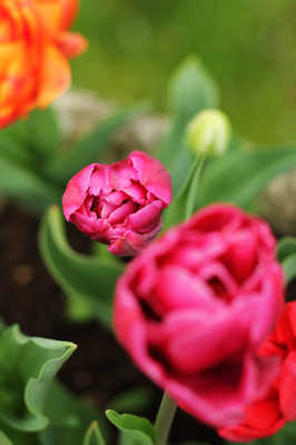 Fleurs du matin