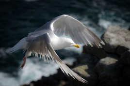 Les ailes de la liberté !