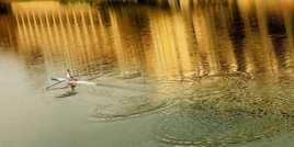 Des ronds sur l'Arno