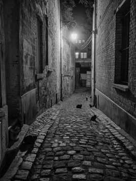 rue des chats