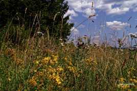 Prairie Auvergnate