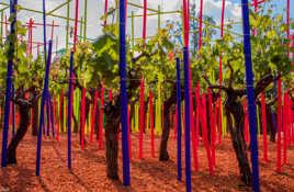 vignes colorées  **