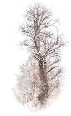 Auprès de mon arbre...