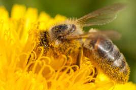 Du pollen !!!!!