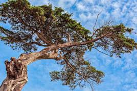Un arbre perché