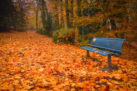 Un banc d'automne