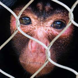 Cruelle captivité