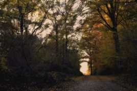 A travers la forêt