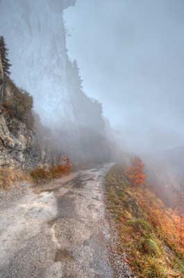 Automne dans la brume...