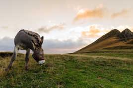 L'âne basque à deux pattes