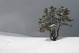 Solitude face à la rigueur de l'hiver