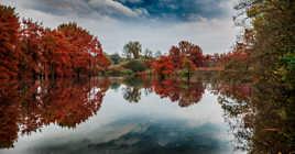 Reve d'automne