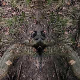 portrait végétal